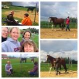 Trainer für pferdegestützte Coachings