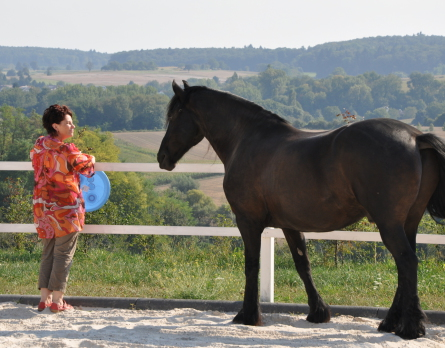 Beziehungstraining Partner Pferd