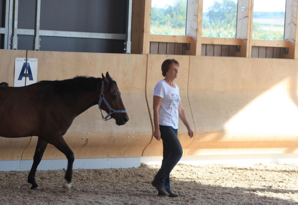 Das Pferd folgt der Frau ohne Strick im Gelassenheitstraining