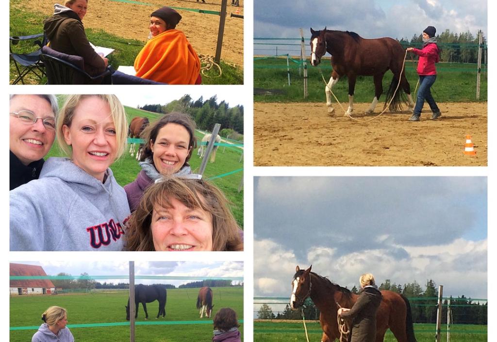 Pferdegestützte Coaches treffen sich zur Supervision