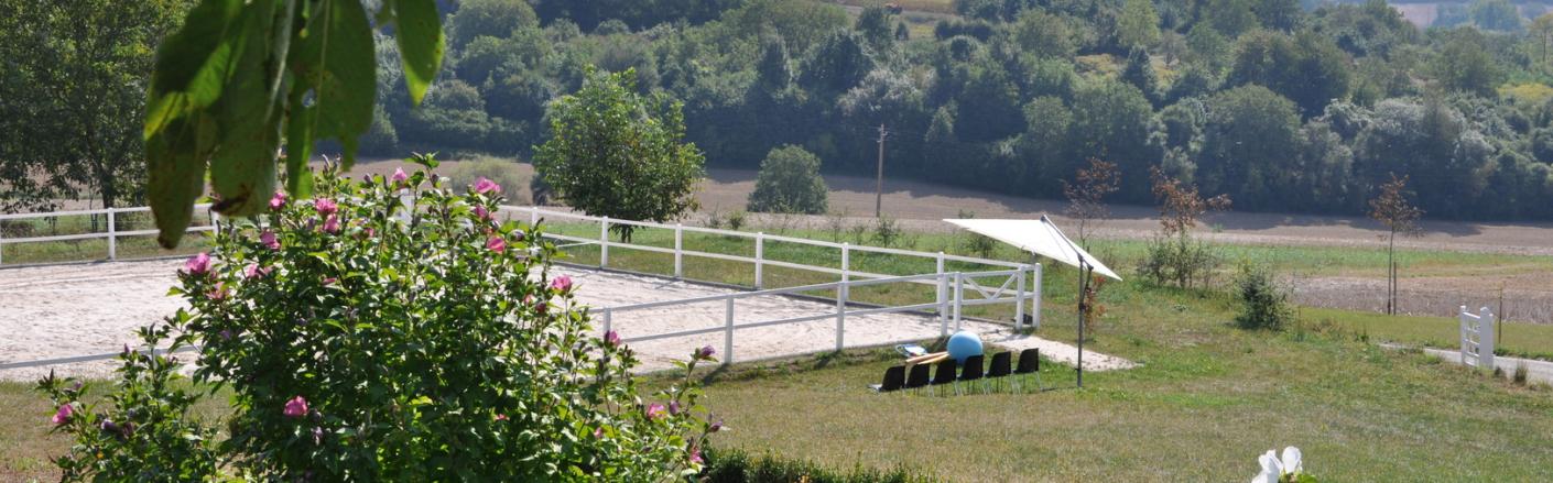 Coachings mit Pferden