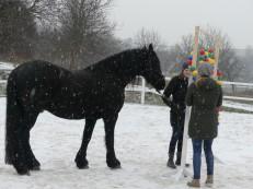 Felicitas im Coaching mit Pferd