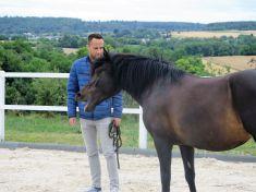 Thomas mit Femi im Pferdegestützten Coaching