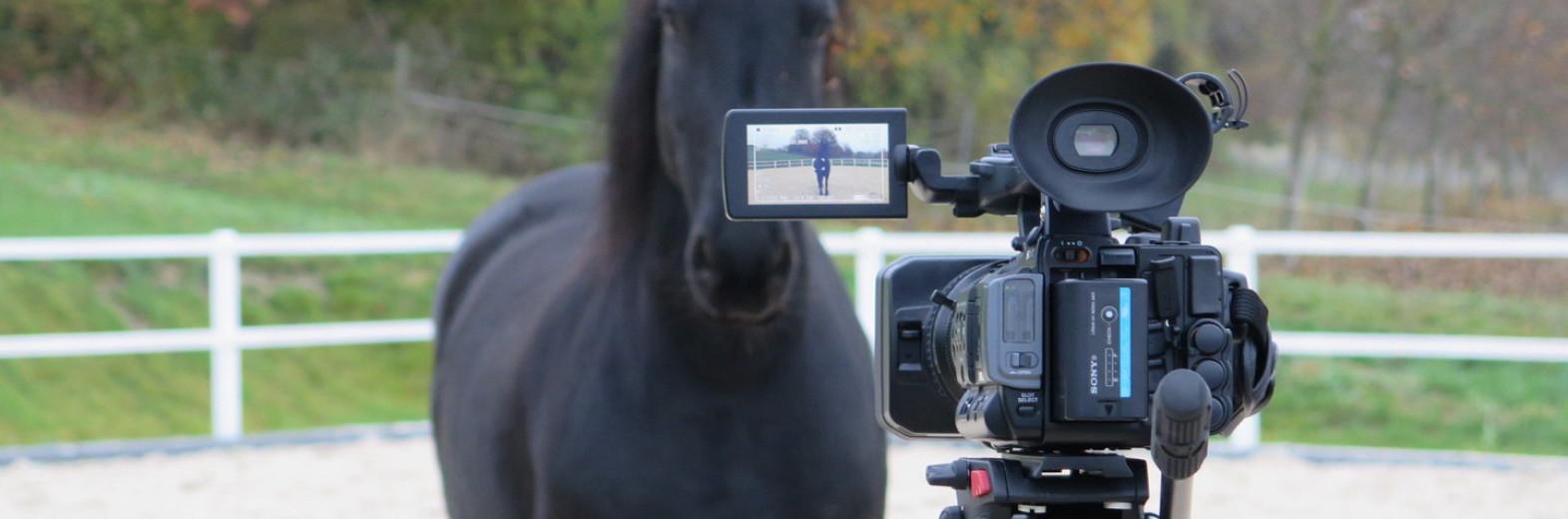 con i cavalli e teambuilding