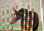Pferd im Bällevorhang