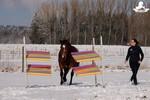 Pferd läuft alle durch die Vertrauensgasse