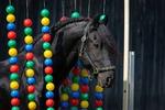 Vertrauenstraining mit dem Pferd