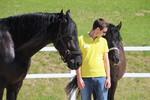 Teambildung mit Pferd