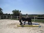 Vertrauensübung mit Pferd
