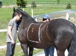 Familienzeit mit Pferd