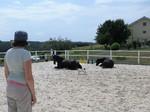 Systemische Beratung mit dem Pferd
