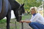 Vertrauensarbeit mit dem Pferd