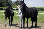 Beziehungsarbeit Pferd
