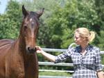 Kennenlernen eines Pferdes