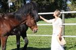 Begegnung zweier Pferde auf der Wiese