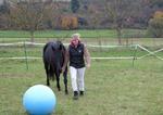 Frau zeigt dem Pferd einen Ball