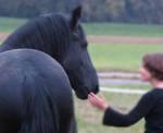 Freunschaft schließen mit dem Pferd