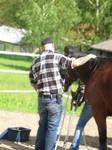 Freies putzen des Pferdes