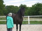 Frau bewundert Pferd